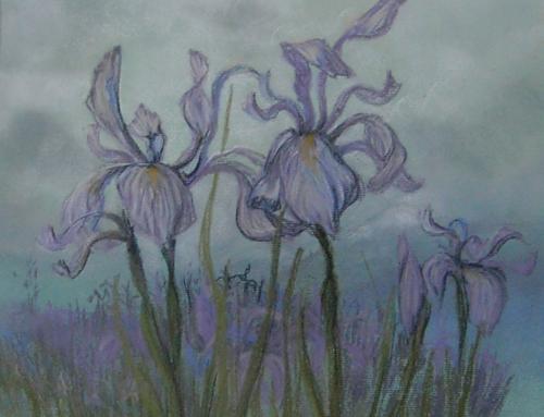 """""""Colorado Iris"""""""