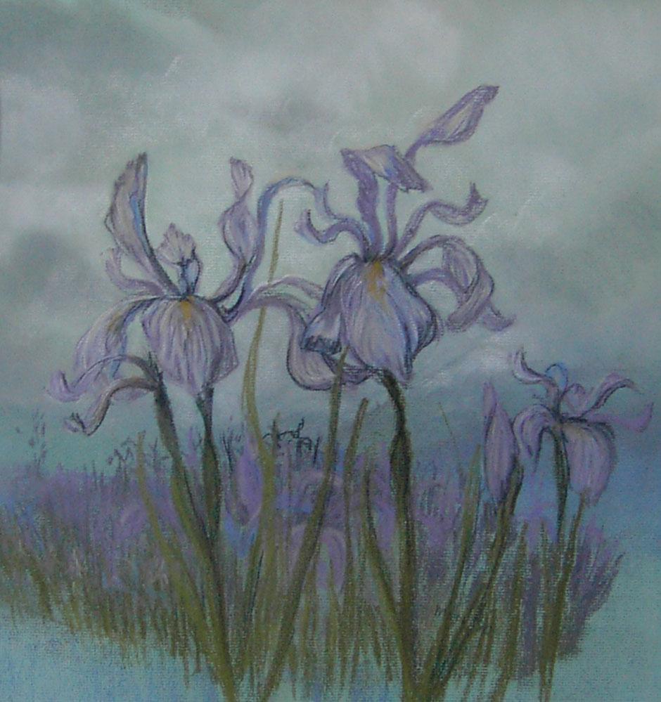 Colorado-Iris