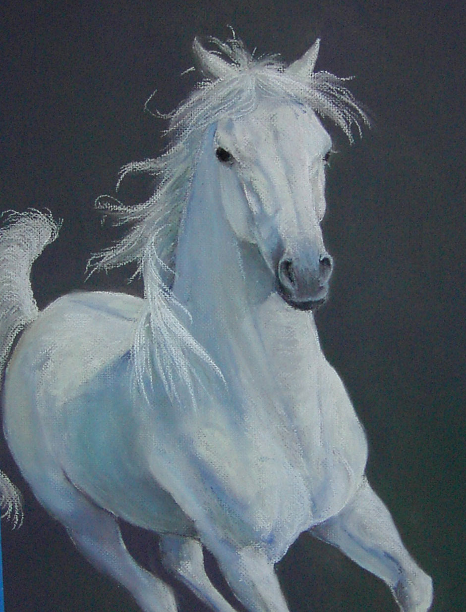 white-horse-in-motion